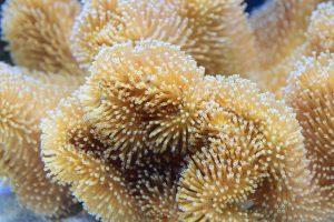proteger-les-coraux